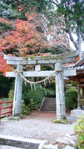 Temple Daikozenji, azalées, momiji, saga, kyushu, tori