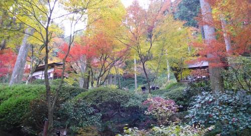 Temple Daikozenji, azalées, momiji, saga, kyushu