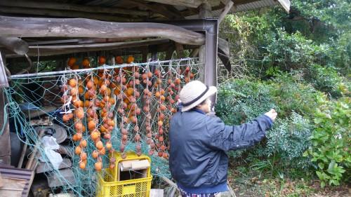 Noka minshuku, séjour à la ferme, Kitsuki, Oita, Kaki