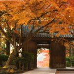 Admirer les couleurs de l'automne au temple Daikozenji