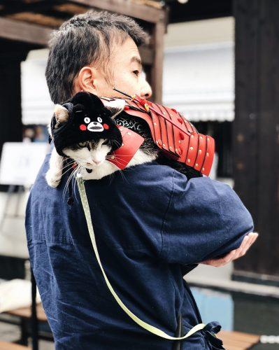 Château de Kumamoto, travaux, Japon, Kyushu, chat samourai