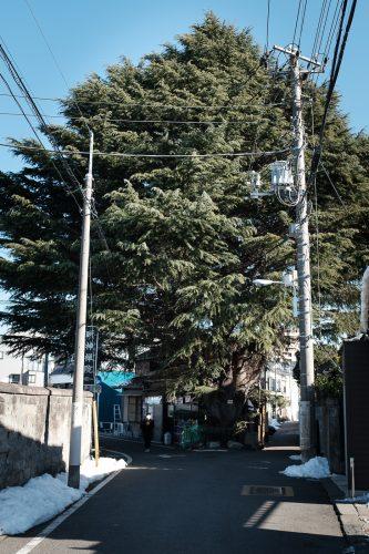 Test, Wifi gratuit de Tokyo, Connexion internet, Tokyo Wi-Fi, Cèdre de l'Himalaya