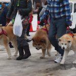 Inukko Matsuri : le festival du chien et des temples de neige à Yuzawa