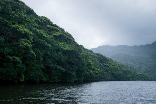 Le fleuve Urauchi sur l'île d'Iriomote dans la Préfecture d'Okinawa, Japon