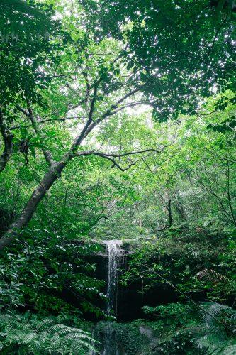 La végétation dense de la jungle de l'île d'Iriomote dans la Préfecture d'Okinawa, Japon