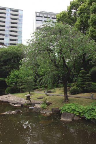 Le jardin du sanctuaire Togo, Tokyo, Japon.