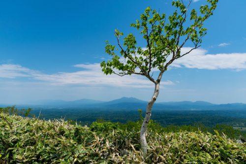 Végétation pendant l'ascension du Mt. Mokoto à Koshimizu, Hokkaido, Japon