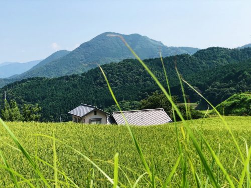 Rizières et montagnes, paysages typique de Toon, préfecture d'Ehime, Japon