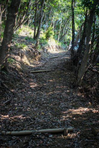 Sentier de randonnée sur l'île d'Ohnyujima, préfecture d'Oita, Japon