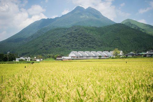 Rizières et montagnes près de Yufuin, préfecture d'Oita, Japon