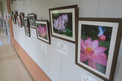 Tour d'observation de Tambo Art à Gyoda, non loin de Kumagaya dans la préfecture de Saitama, Japon