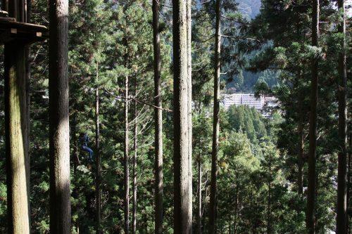 Forest Adventure dans la vallée d'Iya, préfecture de Tokushima, Shikoku, Japon