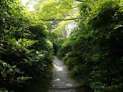 L'épaisse végétation de la résidence Okochi Sanso, à Kyoto, Japon