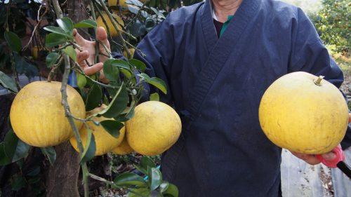 Dans le jardin de la ferme de M et Mme Ohira, Izumi, Kagoshima, Kyushu, Japon