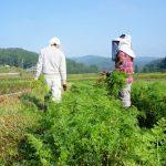 Séjour à la ferme et écotourisme dans la préfecture d'Oita