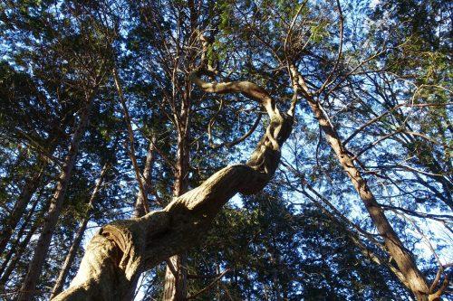 La forêt mystérieuse au sommet du Mt Hodo à Nagatoro, près de Chichibu dans la préfecture de Saitama, Japon