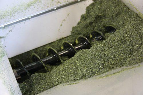 Processus de fabrication du thé vert dans une usine de thé à Higashisonogi, préfecture de Nagasaki