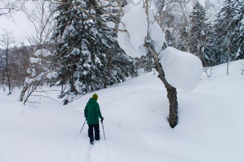 Asahidake, Hokkaido : M. Toba pratiquant le ski nordique dans la forêt de pins