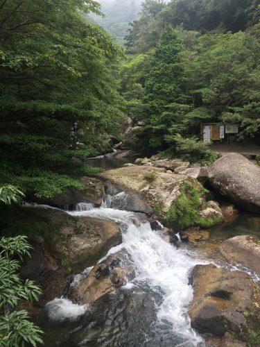 Rivière à l'entrée du parcours de Shiratani-Unsuikyo sur l'île de Yakushima, Japon