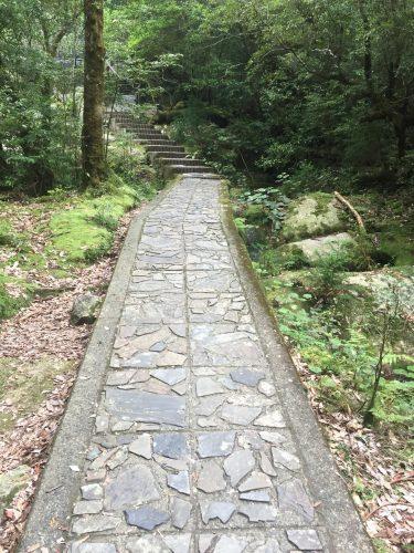 Chemin bien balisé traversant la forêt à Shiratani-Unsuikyo sur l'île de Yakushima, Japon