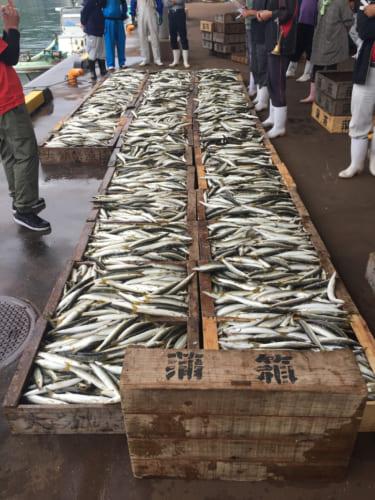 Marché aux poissons de Kamae : les poissons prêts pour les enchères
