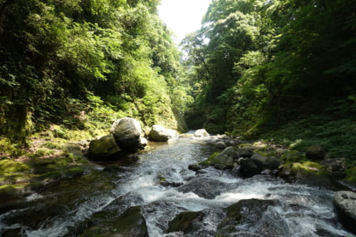 La rivière Iwato, entourée d'une forêt luxuriante, Takachiho, Miyazaki, Kyushu