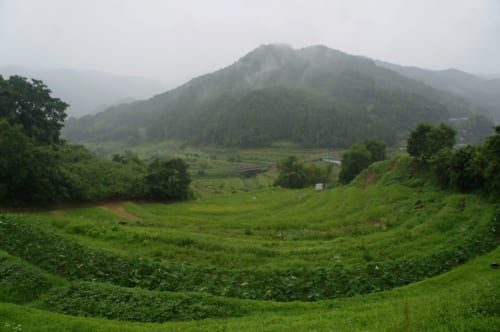 Champs en terrasse, sous la pluie, à Asuka, Nara