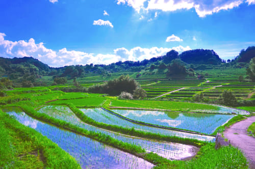 Les rizières d'Inabuchi Tanada au début de l'été, inondées sous un ciel bleu