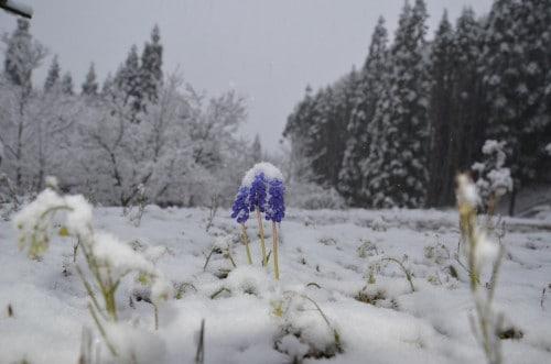 beautiful winter in Nagano
