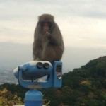 Visit the Monkeys of Kyoto's Arashiyama