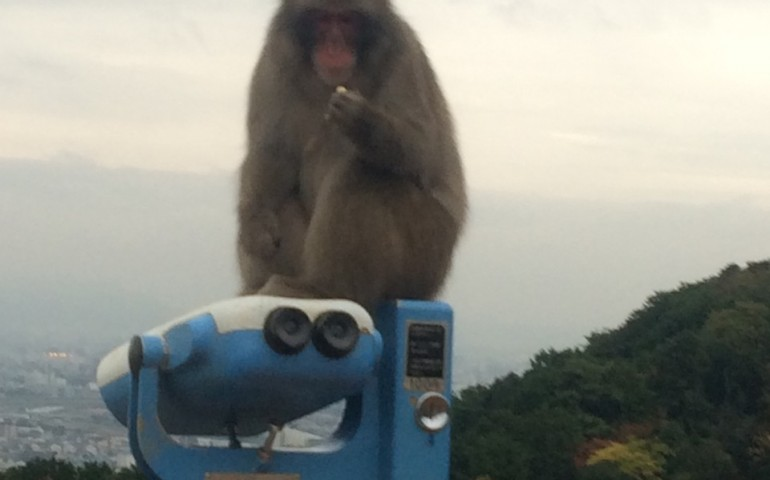 Monkeys in Kyoto's Arashiyama!