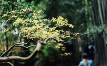 Kamakura Day Trip: Hokoku-ji