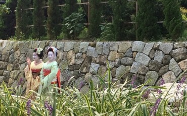Meet Maiko, a Geisha in training!