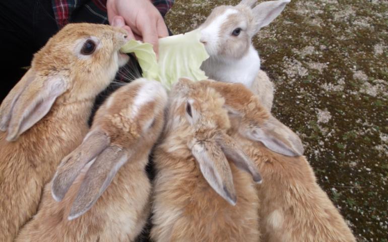 Rabbit Island Take A Trip To Okunoshima