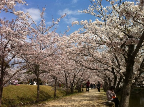 Ogi park in Saga prefecture, Little Kyoto in Kyushu