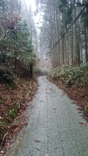 Path in Mount Koya surrounded by forest