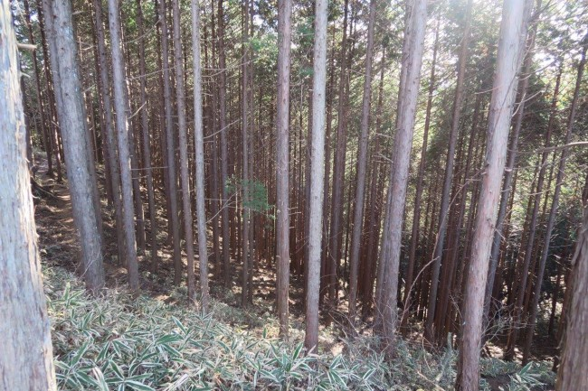 On a hiking path through Nikko forest nearby any given waterfall