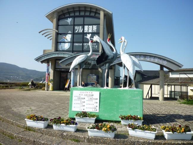 Izumi observation center in Japan, Kagoshima , home to the largest crane migration
