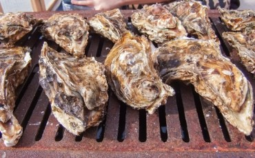 Oyster,Hiroshima,Seafood,Restaurant,Local,Cuisine