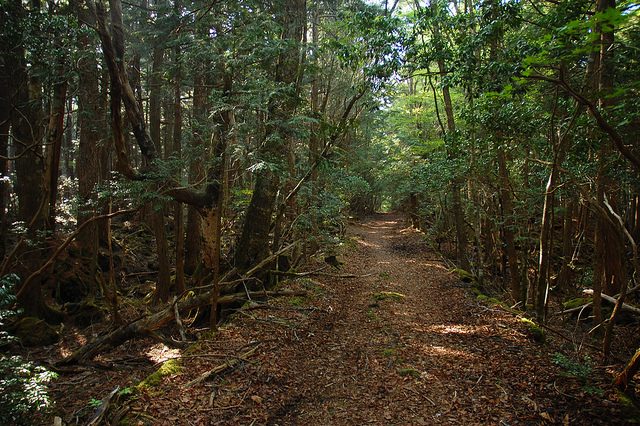 secluded path in Aokigahara forest, which is near Mt Fuji