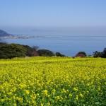 Leisurely bicycle ride on the island of flowers: Nokonoshima