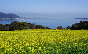 Fukuoka, bicycle, outdoors, nature, flower, island, scenery