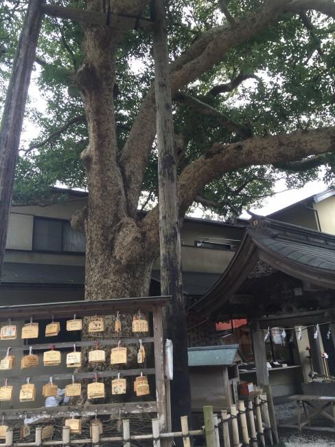 Shinto votive tablets among Kamakura Goryo Shrine grounds