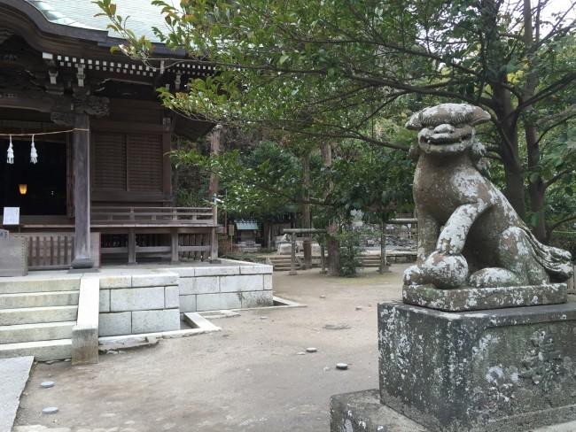 Lion gazing among Goryo Shinto Shrine grounds, Kamakura