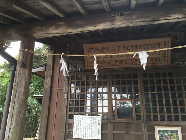 Finding relaxation among the Shinto Goryo Shrine grounds, Kamakura