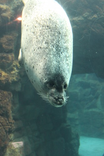 Seal and other sea animals in the Osaka aquarium