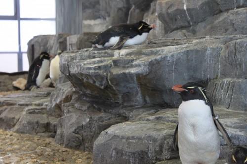 Penguins at the Osaka aquarium