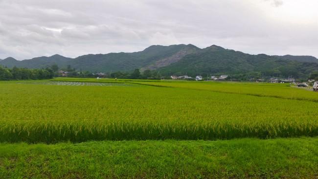 Green field in Konohanakan before the restaurant.
