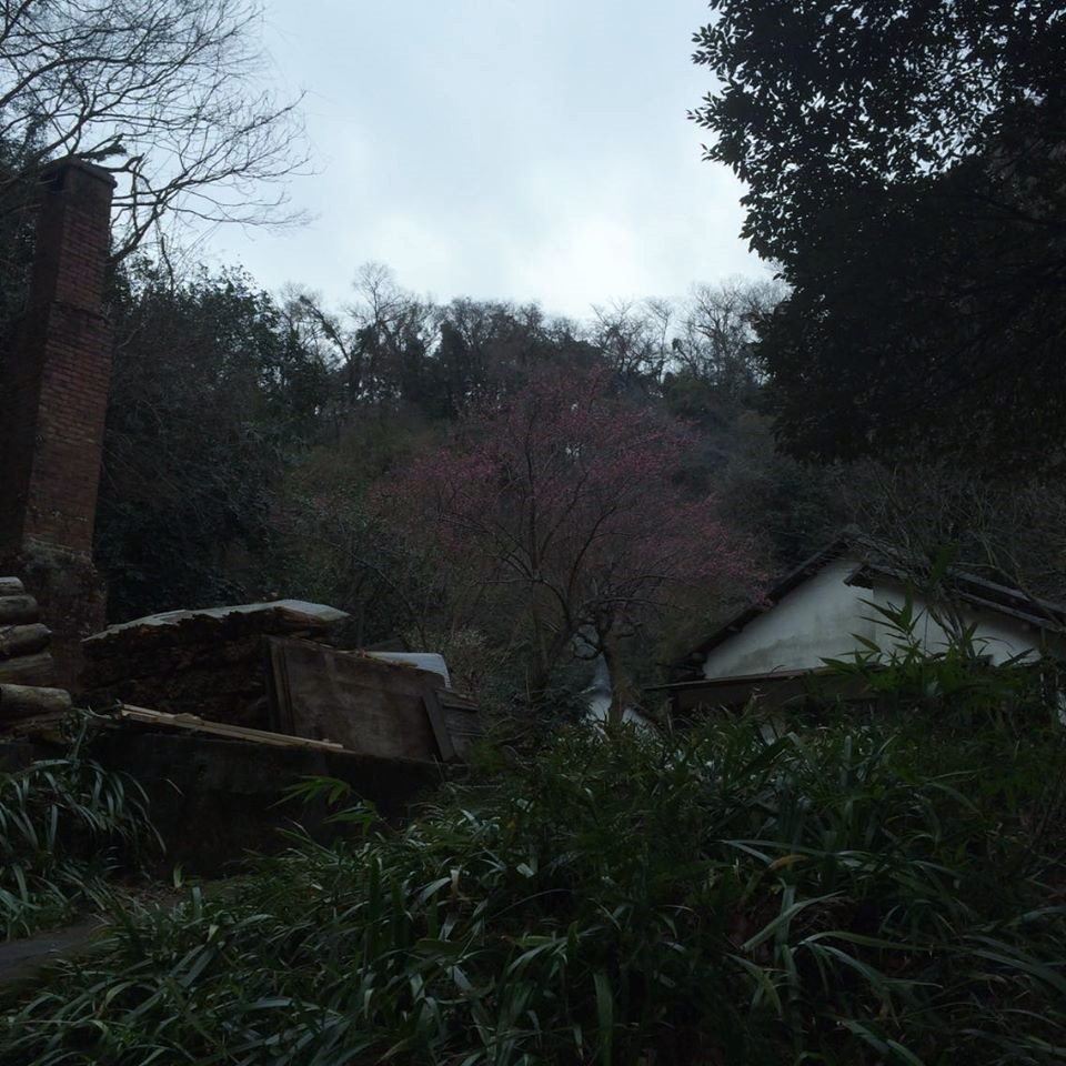 hiking,kamakura,nature,temple,heritage,art,daibutsu,buddha