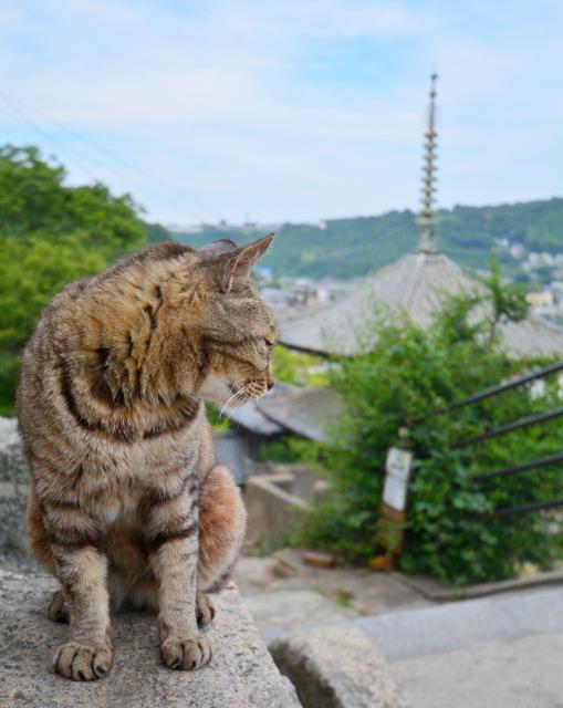 Onomichi, a quiant town in Hiroshima Japan